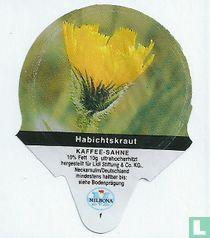Heimische Blumen - Habichtskraut