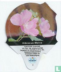 Heimische Blumen - Hibiscus-Malve