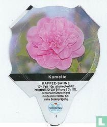 Heimische Blumen - Kamelie