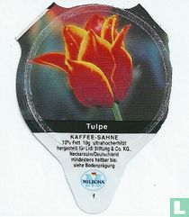 Heimische Blumen - Tulpe