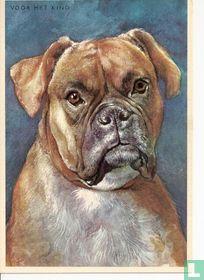 voor het kind-Hond: boxer