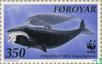 Whales of the North Atlantic