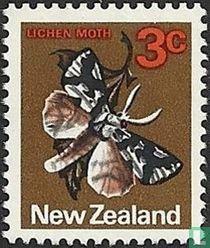 South Island Lichen Moth kaufen