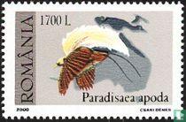 Birds of Paradis