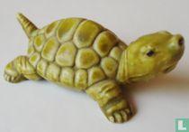 Panzerschildkröte