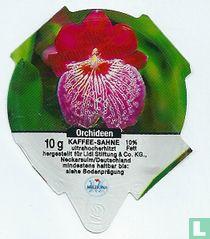 Orchideen 2
