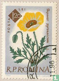 The centenary of Bucharest Botanical Garden