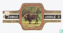 Europese Bison