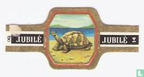 Olifant-schildpad