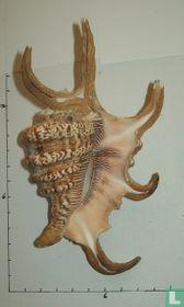 Harpago arthriticus
