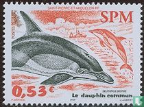 The common dolphin