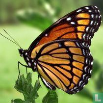 Insecta (Insekten) naturalien katalog