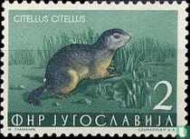 Citellus