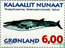 Walvissen