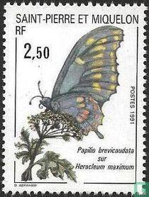 Insecten en planten
