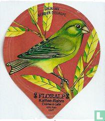 Vögel - Grünfink