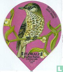 Vögel - Misteldrossel