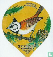 Vögel - Haubenmeise