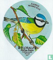 Vögel - Blaumeise