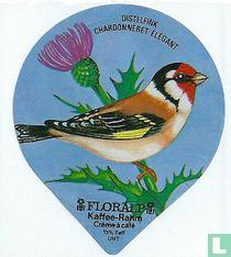 Vögel - Distelfink
