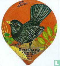 Vögel - Amsel