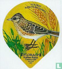 Vögel - Feldlerche