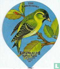 Vögel - Zeisig