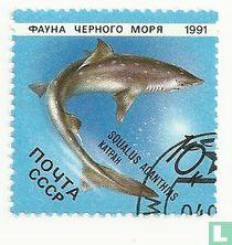 Fauna van de Zwarte Zee kopen