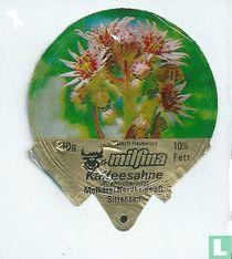 Milfina - Dach Hauswurz