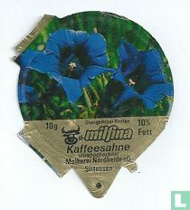 Milfina - Stengelloser Enzian