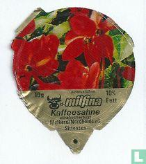 Milfina - Alpenveilchen