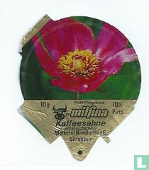 Milfina - Wilde Pfingstrose