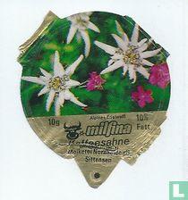 Milfina - Alpines Edelweiß