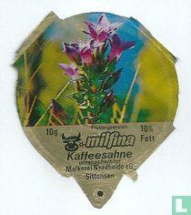 Milfina - Frühlingsenzian
