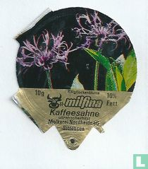 Milfina - Bergflockenblume
