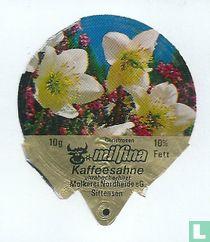 Milfina - Christrosen