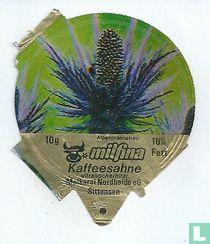 Milfina - Alpenmannstreu