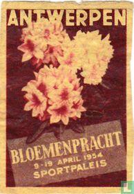 Antwerpen Bloemenpracht