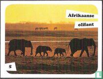 Afrikaanse olifant 5