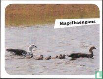 Magelhaengans