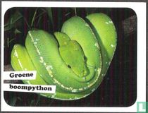 Groene boompython