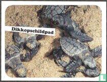 Dikkopschildpad