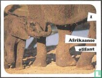 Afrikaanse olifant 1