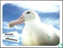 Grote albatros
