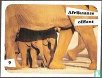 Afrikaanse olifant 9