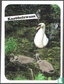 Knobbelzwaan