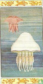 Geöorde Zeekwal