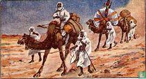 Kameel - Sahara.