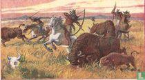 Bisonjacht bij de Indianen.