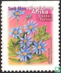 Flora en Fauna (Ningizimu)